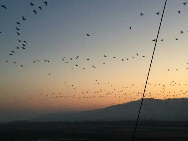 철원 지역 노을과 국경을 마음껏 넘나드는 철새들.