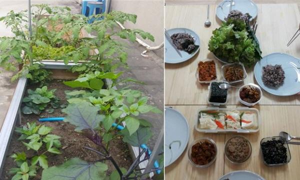 왼쪽-텃밭에서 잘 자라고 있는 가지, 고추, 당귀, 딸기, 방울토마토   / 오른쪽-텃밭에서 자란 채소와 함께 차려진 밥상