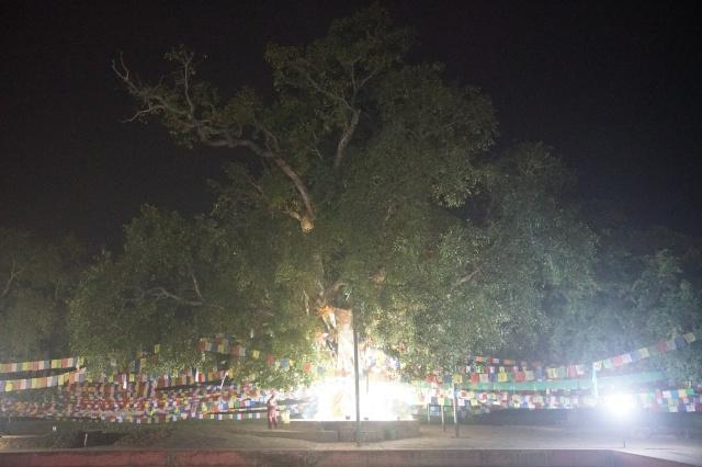 어두워지자 보리수 나무의 조명이 더 밝게 빛났습니다