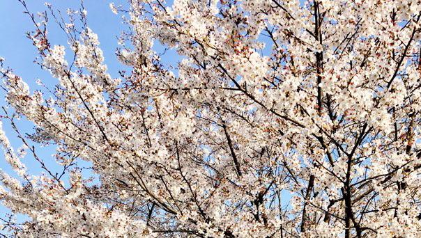 여느때와 마찬가지로 봄은 우리 곁에 또 찾아왔습니다.
