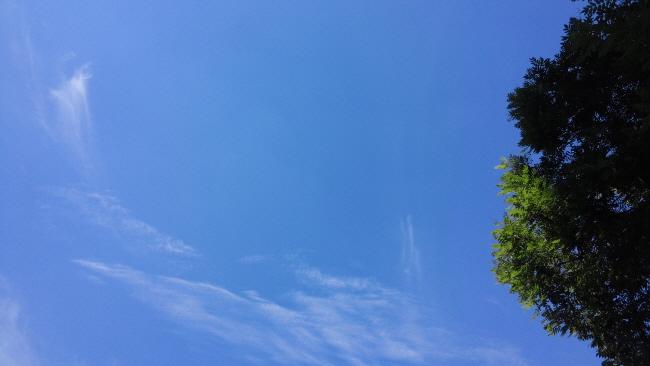 미세먼지 없는 맑은 하늘과 푸른 잎을 꿈꿉니다.