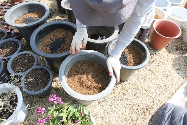 부엽토, 퇴비, 흙과 모래를 잘 섞어 두북표 흙을 제조해서 화분에 담아 두었습니다.