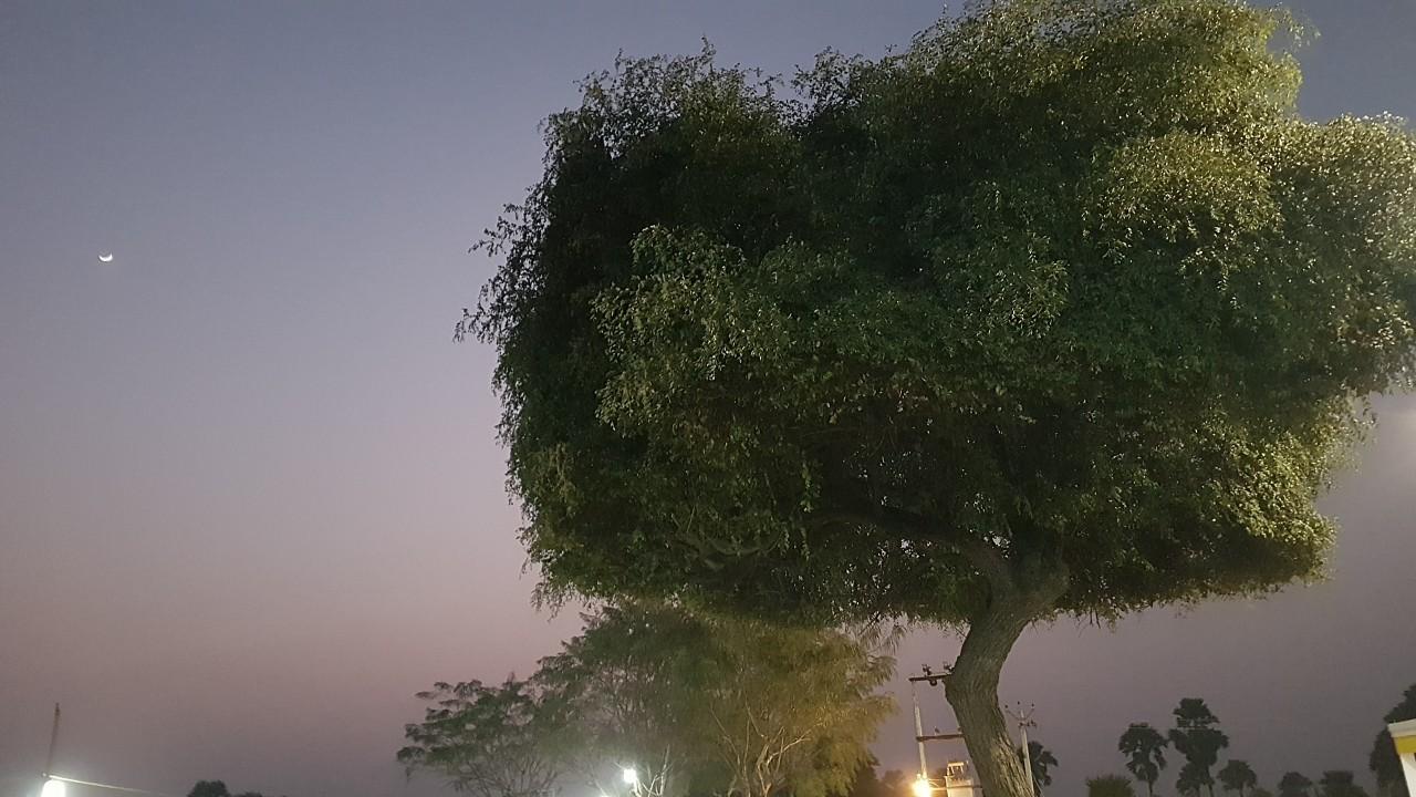 꿈의 나무, 수자타 아카데미 뒷 뜰에서...